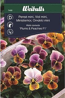Weibulls Pensé mini Viola cornuta