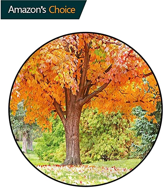 RUGSMAT Nature Area Silky Smooth Rugs Tree Forest Autumn Season Area Rug Perfect For Any Place Diameter 59