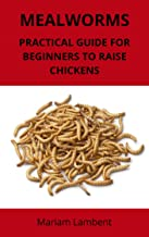MEALWORMS: Practical guide for beginners to raise chickens
