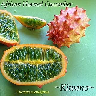 10 Kiwano Cucumis Metuliferus African Horned Melon Cucumber Non GMO Seeds HD7