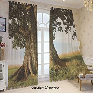 Print Curtains 95 Inch Length Majestic Oak Tree on Grass Estonia Northern Europe Rural in Summer Landscape for Patio Glass Door,Ornamental Grommet Sheer Curtains,2 Panel Set,52W x95L Inches,Cocoa Fer