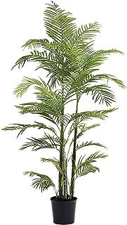 Little Green House 7251-170 Green Areca Palm Garden Decor