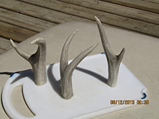 Three Forked Deer Antlers. Use These 3 to Craft or Make a Display Stand or Holder for Flintknapped Knives, Axes, Peace Pipe, Obsidian Knife, Custom Knife, Fixed Blade, Tomahawk, Pocket Knife