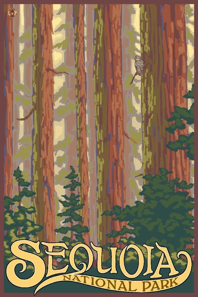 Sequoia National Albuquerque Mall Park California - Giclee View Ga Forest 36x54 Complete Free Shipping