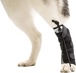 Walkin' Rear No-Knuckling Training Sock Helps Dogs Pick up Their feet When knuckling Under or dragging Their Rear Paws