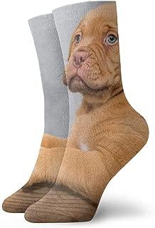 WEEDKEYCAT Cute American Bulldog Brown Dog Adult Short Socks Cotton Funny Socks for Mens Womens Yoga Hiking Cycling Running Soccer Sports