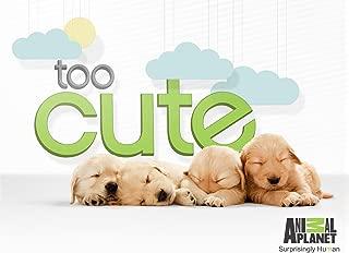 Too Cute! Season 3