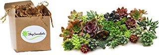 purchase succulent cuttings
