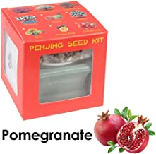 Eve's Garden Pomegranate Penjing Seed Kit, the Chinese Art of Bonsai, Complete Kit to Grow Fruit-Bearing Pomegranate Penjing from Seed