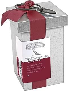 crepe myrtle bonsai specimen tree