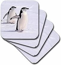 3dRose CST_10508_1 Chinstrap Penguins at Aitcho Islands-Soft Coasters, Set of 4