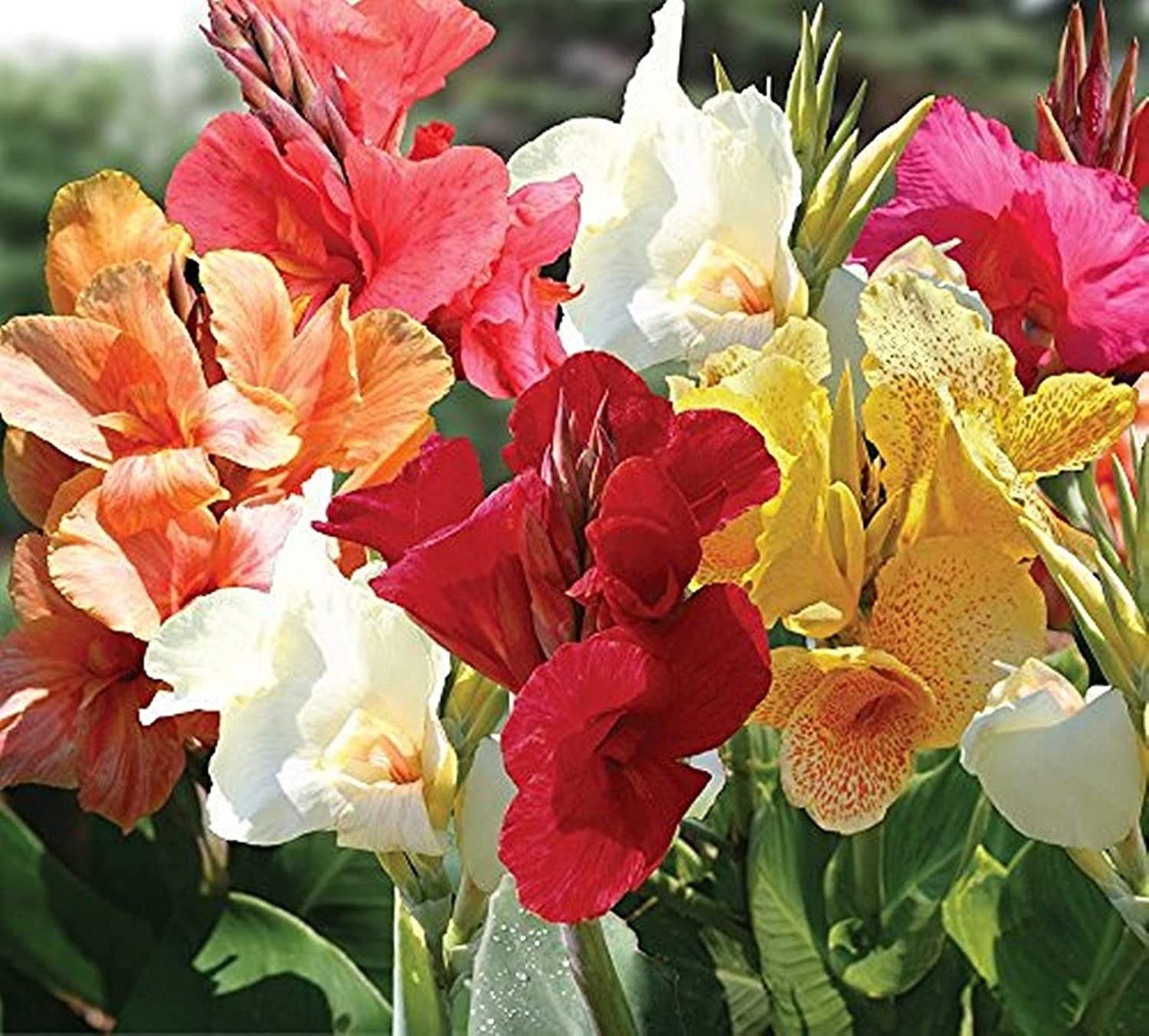 Boston Mall Easy to take Care of Max 54% OFF Garden Perfect Flowers Ornamental