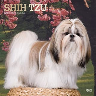 Shih Tzu 2019 12 x 12 Inch Monthly Square Wall Calendar with Foil Stamped Cover, Animals Small Dog Breeds (English, French and Spanish Edition)