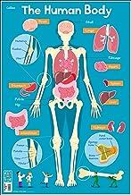 Collins Children's Poster – Human Body