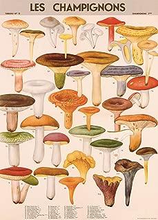 Cavallini Decorative Paper - Mushrooms 20