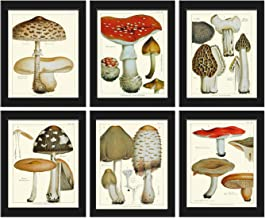 Mushroom Print Set of 6 Antique Botanical Beautiful Red Brown Beige Natural Colored Mushrooms Forest Nature Home Room Deco...