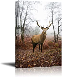 Beautiful Red Deer Stag in Foggy Misty Forest Landscape in Autumn Fall Wood Framed - Canvas Art Wall Decor - 24