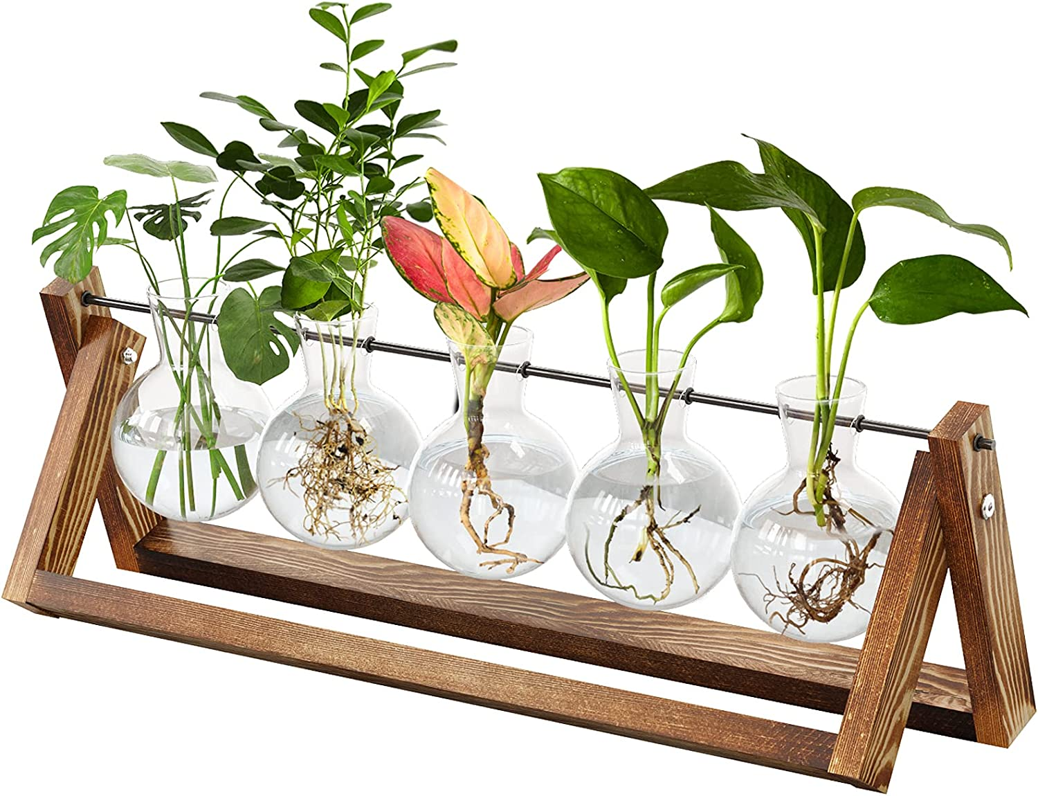 CFMOUR Plant Terrarium with Wooden Stand, Desktop Propagation Stations Glass Air Planter Metal Swivel Holder for Indoor Live Hydroponics Plants Office Home Garden Decor (5 Bulb Vase)
