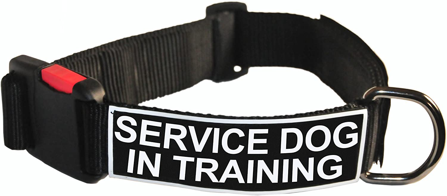 Dean and Tyler Patch Collar , Nylon Dog Collar with SERVICE DOG IN TRAINING Patches  Black  Size  Large  Fits Neck 26Inch to 37Inch