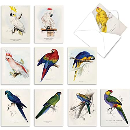 Bird Cards with envelopes with stickers Bird Stationery Blank Inside chickadee card hummingbird card Bird Note Cards