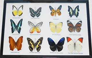 GABUR Real 12 Mix Butterflies Set Specimen Collection Gifts Taxidermy Display in Frame, 16.93 x 9.85 x 0.98 Inches, Black