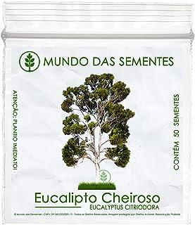 50 Sementes de Eucalipto Limão Cheiroso - Eucalyptus citriodora