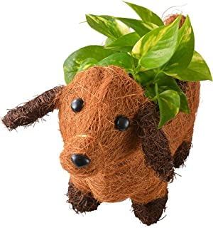 花のギフト社 わんわんバスケット 観葉植物 ポトス フラワーギフト 鉢植え 3号ポット