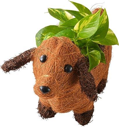 わんわんバスケット 観葉植物 ポトス フラワーギフト 鉢植え 3号ポット