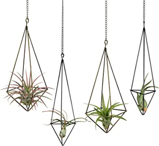 Best air plant hanging holder Reviews