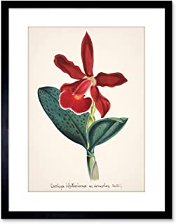 Painting Book Page Orchid Collection Cattleya Schilleriana Framed Wall Art Print