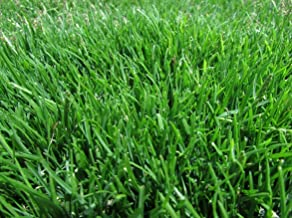 Emerald Zoysia (Zoysia Emerald) Grass seeds-1/4 lb