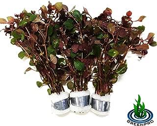 Best ludwigia aquarium plant Reviews