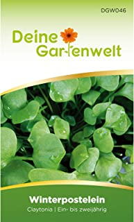 Winterpostelein   Winterportulak   Samen für Portulak   Salatsamen   Tellerkraut   Saatgut für Postelein