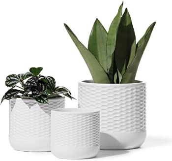 3-Pack Potey Indoor Ceramic Plant Pot