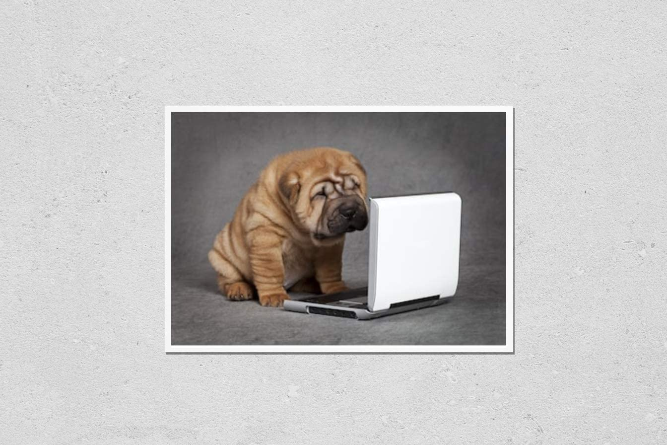 KwikMedia Poster Reproduction of 2021 autumn and winter new Sharpei Puppy Watching DVD Dog OFFicial store