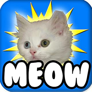 ! Cat Meow Meow, #1 You Are My Sunshine (feat. Fun Kitty Cat Song & Funny Songs)