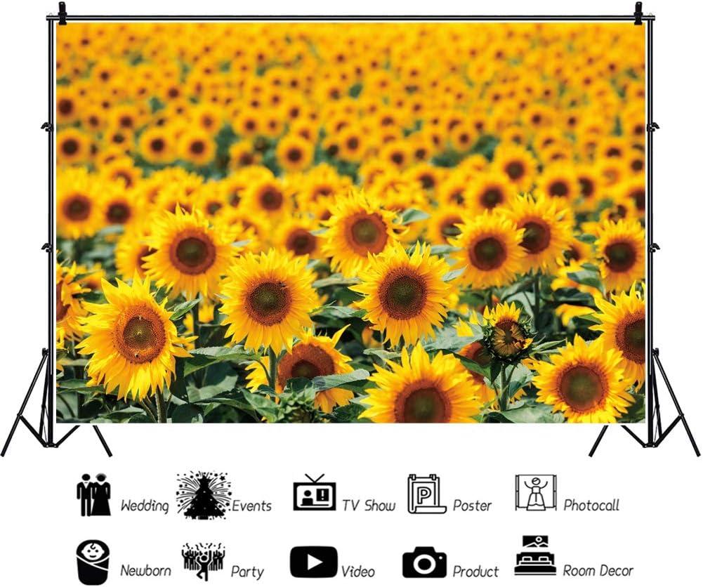 Haoyiyi 10x6.5ft Spring Sunflowers Backdrop Natural Yellow Flowers Field Rural Ranch Idyllic Countryside Farmland Background Photography Photo Wedding Housewarming Garden Home Wallpaper