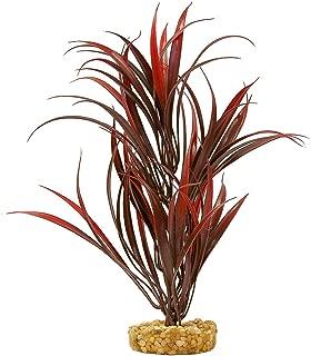 Sword Plant for Aquarium
