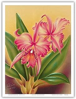 Cattleya Orchid Hawai'i - The Queen of Orchids - Vintage Hawaiian Airbrush Art by Frank Oda (Hale Pua Studio) c.1940s - Hawaiian Master Art Print - 9in x 12in