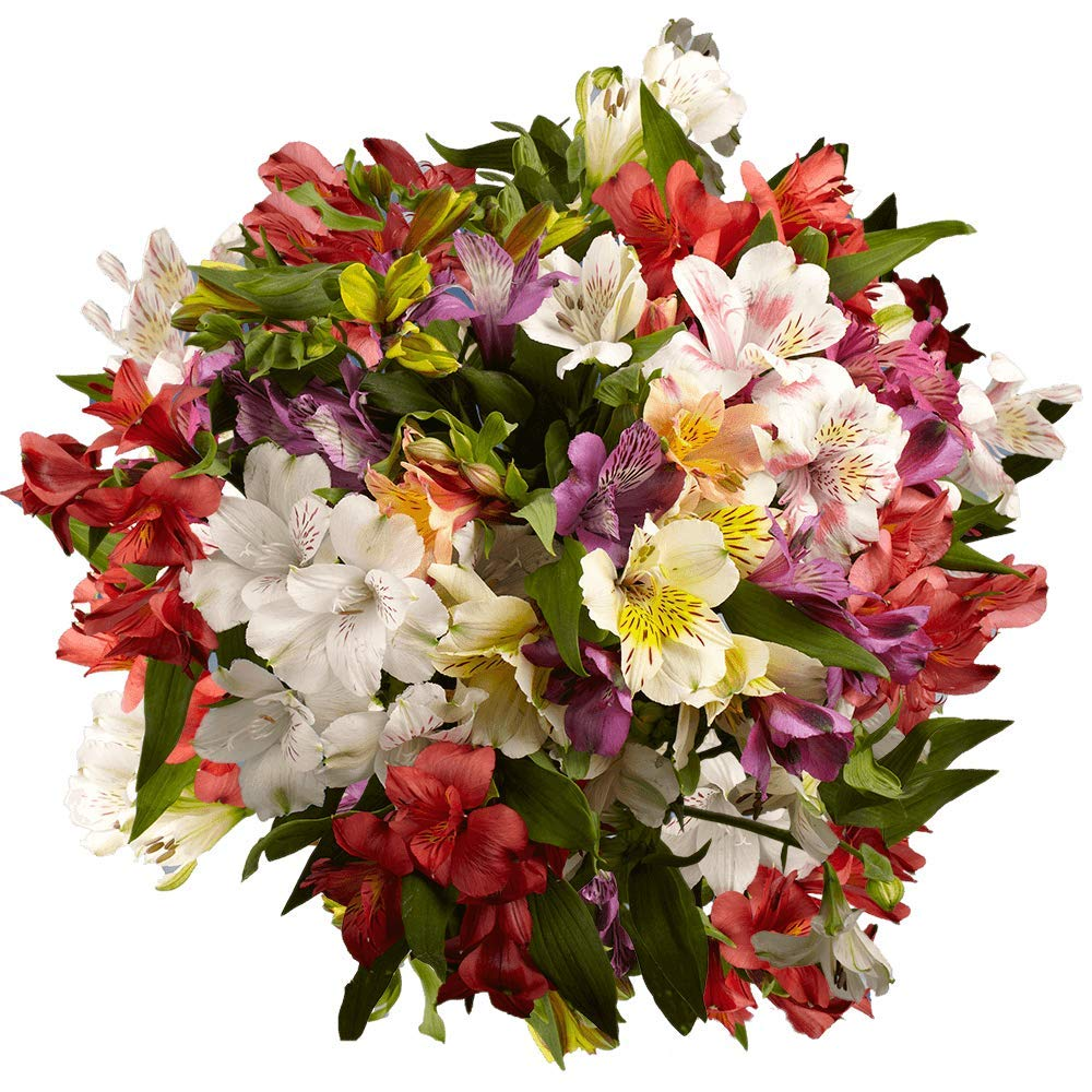 GlobalRose Alstroemeria Flowers- online shop 240 Assorted P Color 2021 autumn and winter new 60 Blooms-