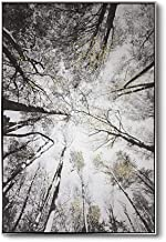 Lamplig Trees Black and White Canvas Wall Art Large Framed 31.4 x 47.2 Inches Gold Leaves Hand Painted Oil Painting Forest Artwork Looking up at The Sky Picture for Living Room Bedroom, Ready to Hang