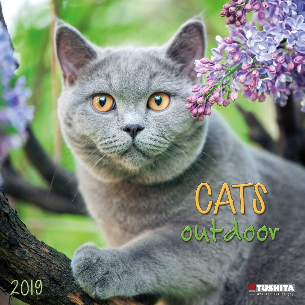 Calendario 2019 gato naturaleza – gato gouttiere – gato jardín (TS ...