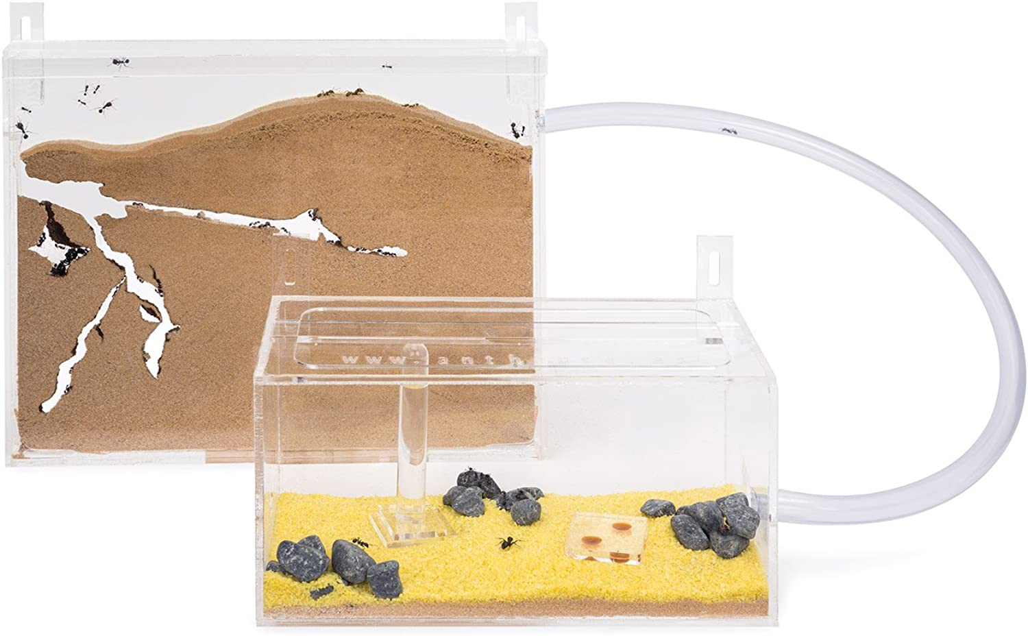 Ant Farm Wall Kit BIG with free Ants and Queen  Educational formicarium for LIVE ants