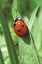 Ladybug / Ladybird on a Blade of Grass Journal: 150 page lined notebook/diary