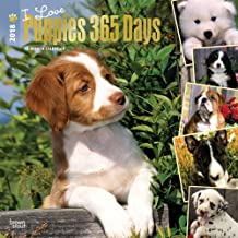 I Love Puppies 365 Days 2018 12 x 12 Inch Monthly Square Wall Calendar with Foil Stamped Cover, Animals Dog Breeds Puppies