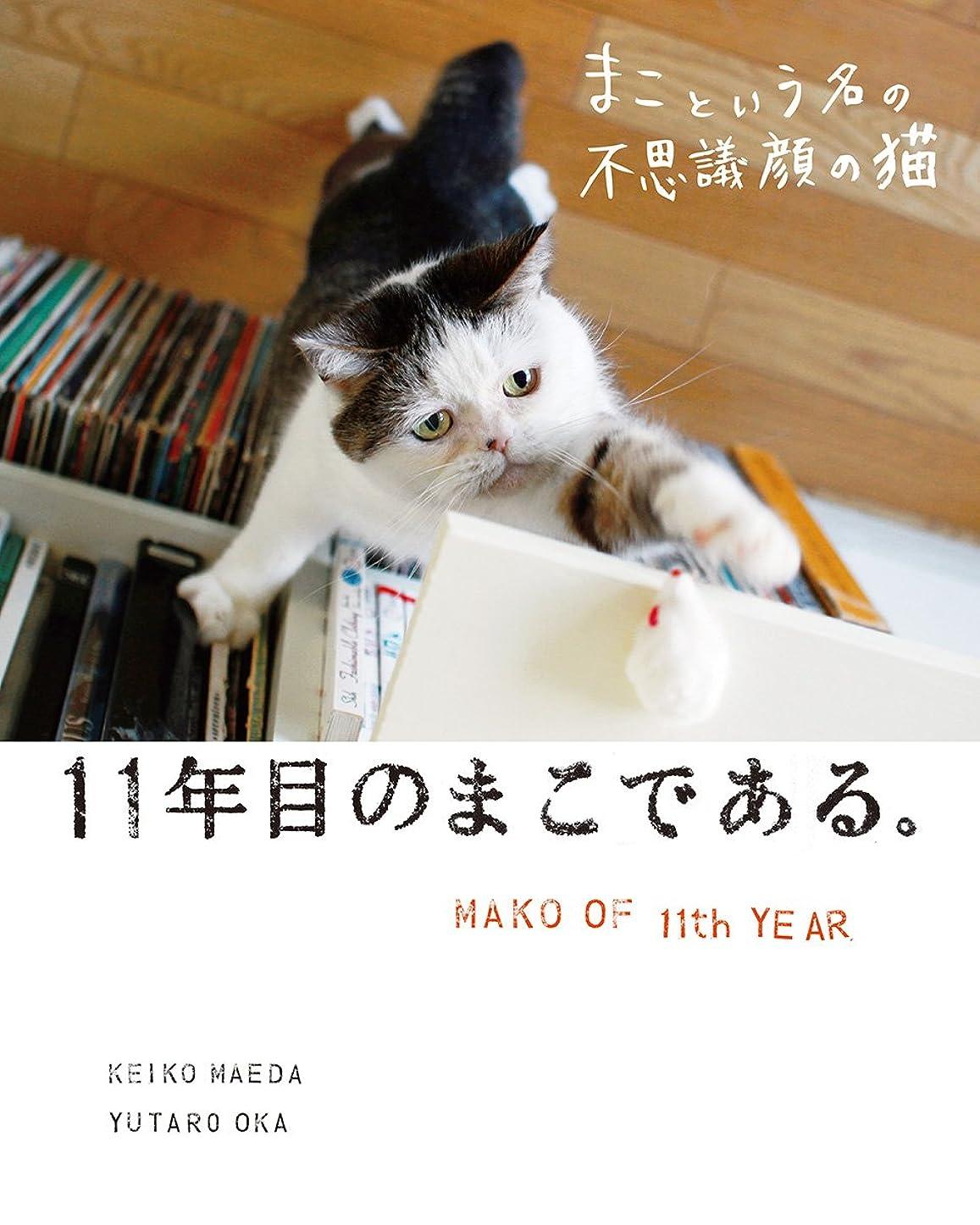 木忠実にモニカまこという名の不思議顔の猫 11年目のまこである。
