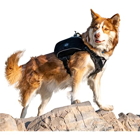Bum's Pack Dog Saddle Bag, Dog Hiking Backpack, Camping or Hiking Accessories Included, Dog Harness Backpack, Backpack for Dogs to Wear, Medium, Large & X-Large Dogs 2021 Edition Backpack for Dogs.