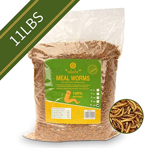 Diig Non GMO Dried Mealworms Treats For Birds Chickens Hedgehog Hamster Fish Reptile Turtles 11 Lb
