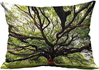 YouXianHome Throw Pillow Cover for Sofa Largest Monkey Pod Tree in Thailand Eastern Green Big Branches Growth Eco Photo Textile Crafts (Double-Sided Printing) 12x16 inch