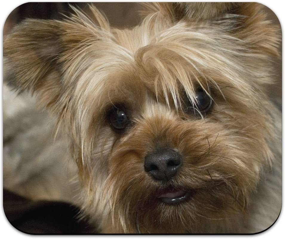 Yorkshire Terrier Yorkie Dog Max 47% OFF Pad shipfree Mousepad Mouse